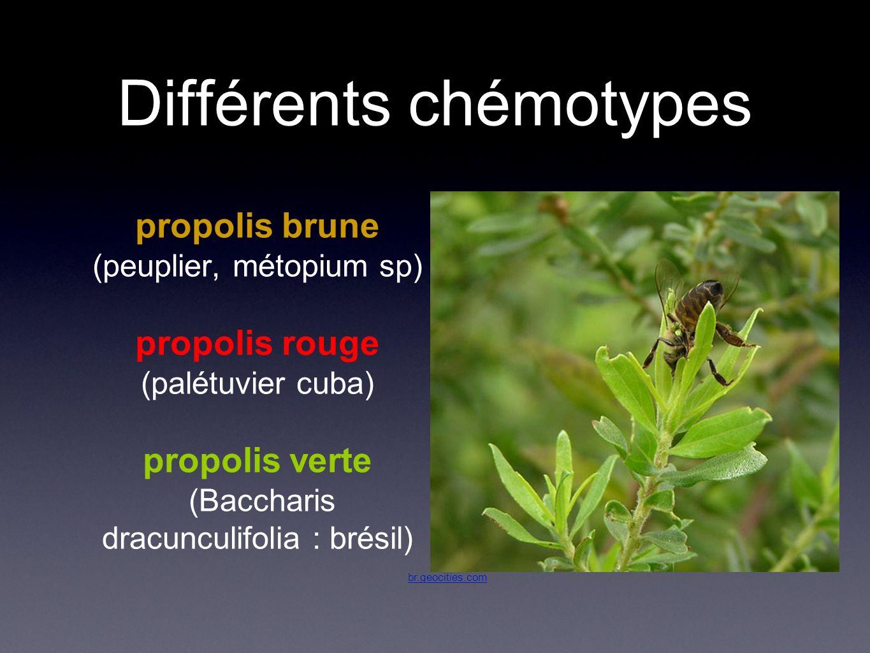 Différents chémotypes