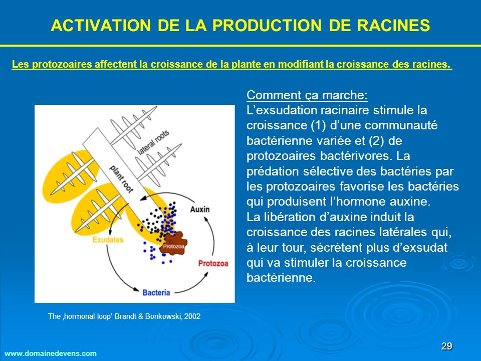 ACTIVATION DE LA PRODUCTION DE RACINES
