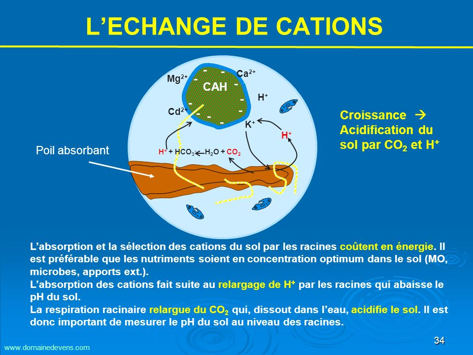 L'ECHANGE DE CATIONS Croissance  Acidification du sol par CO2 et H+