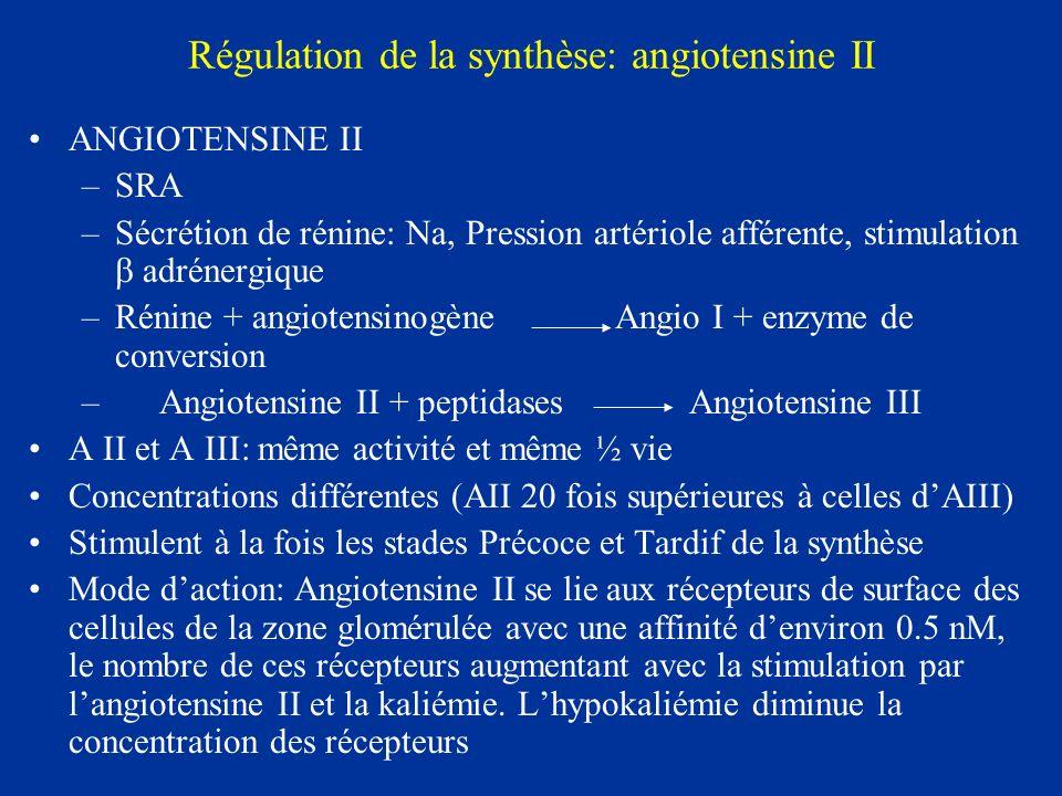Régulation de la synthèse: angiotensine II