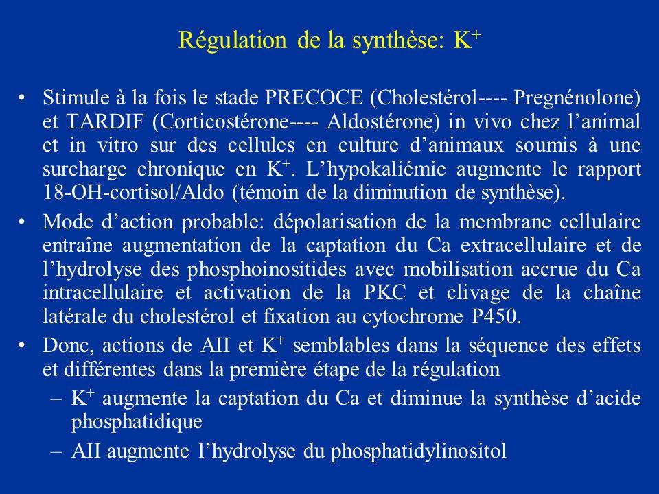 Régulation de la synthèse: K+