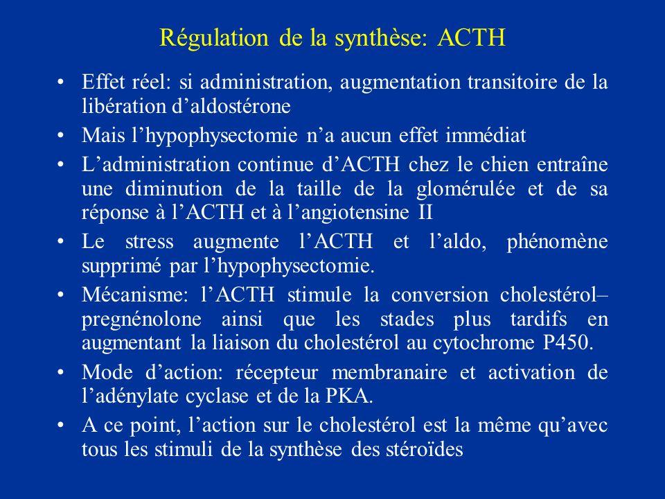 Régulation de la synthèse: ACTH