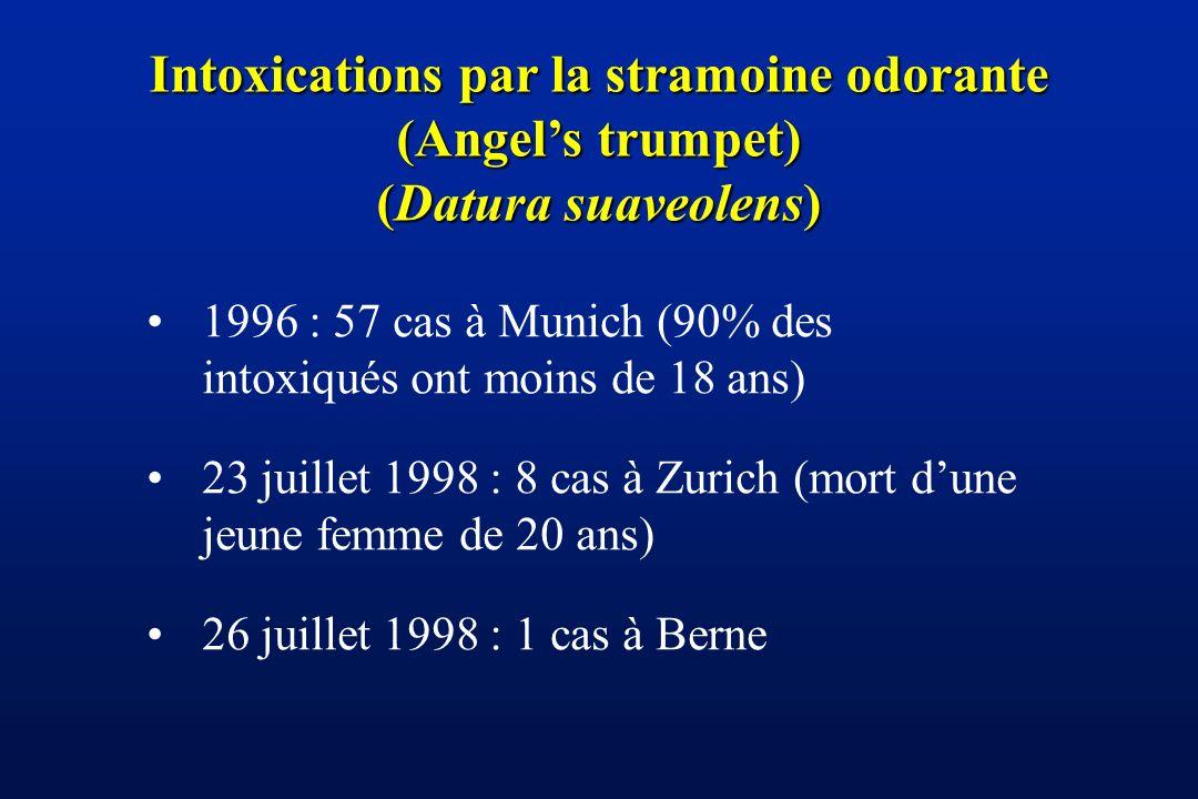 Intoxications par la stramoine odorante (Angel's trumpet)