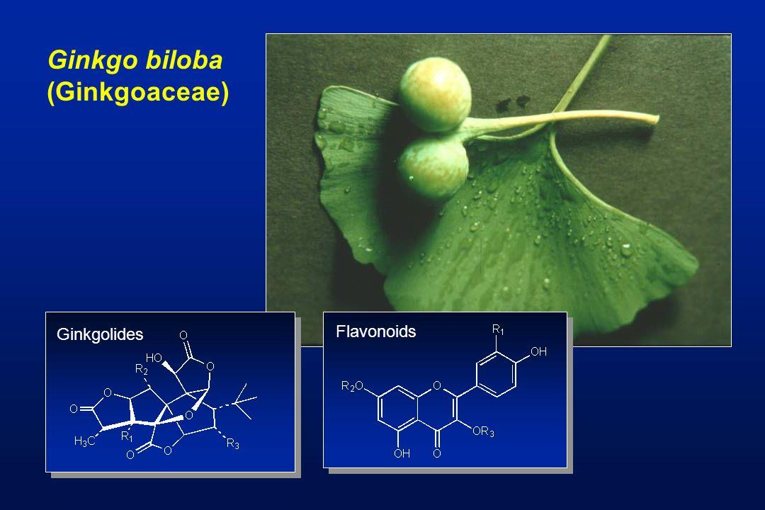 Ginkgo biloba (Ginkgoaceae) Ginkgolides Flavonoids