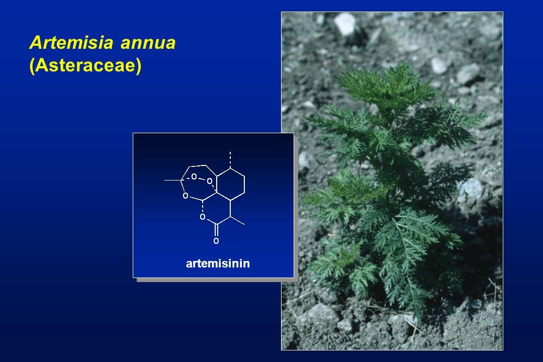 Artemisia annua (Asteraceae) artemisinin
