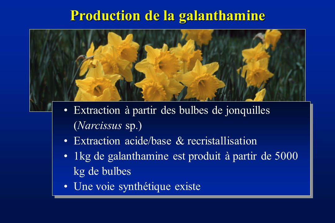 Production de la galanthamine
