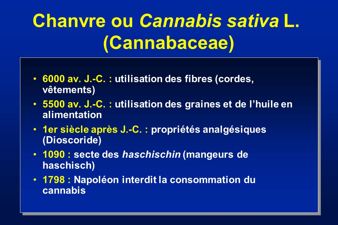 Chanvre ou Cannabis sativa L.