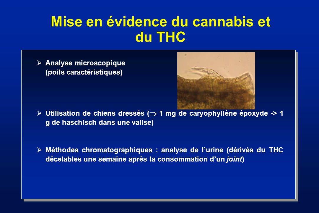 Mise en évidence du cannabis et du THC