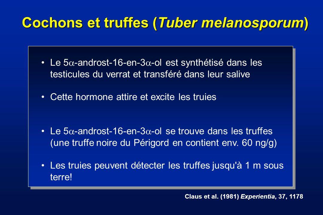 Cochons et truffes (Tuber melanosporum)