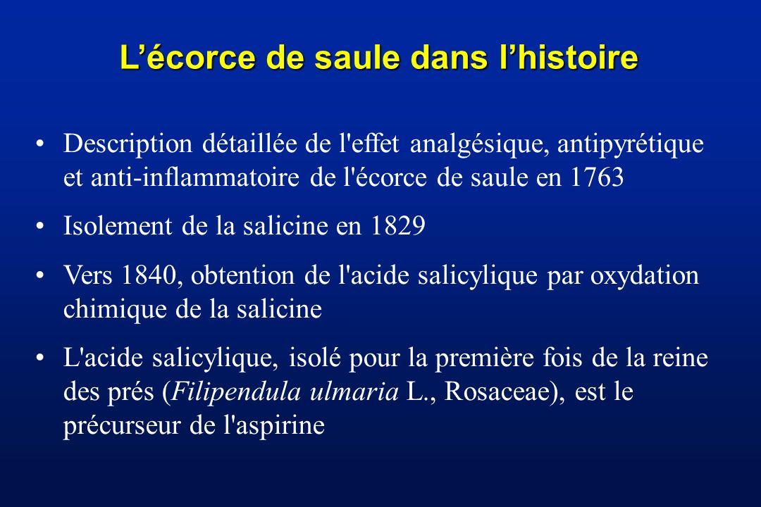 L'écorce de saule dans l'histoire