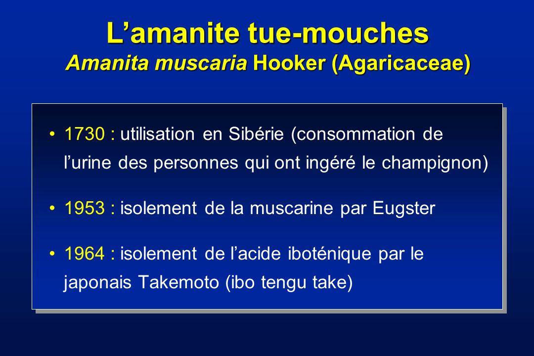 L'amanite tue-mouches Amanita muscaria Hooker (Agaricaceae)
