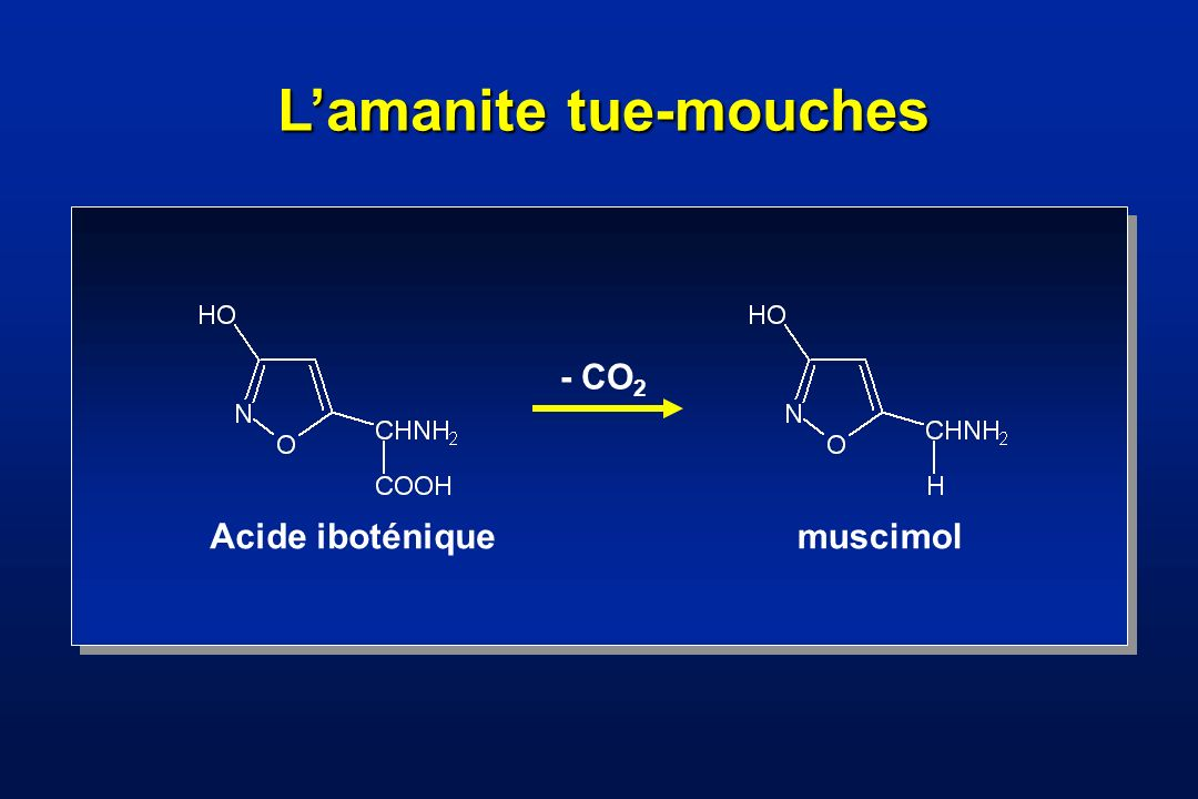L'amanite tue-mouches