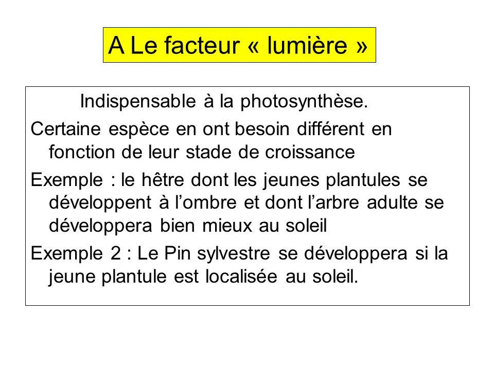 A Le facteur « lumière » Indispensable à la photosynthèse.