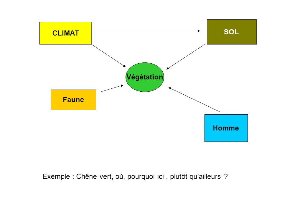 SOL CLIMAT Végétation Faune Homme Exemple : Chêne vert, où, pourquoi ici , plutôt qu'ailleurs