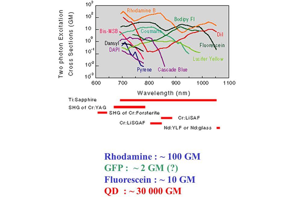 Rhodamine : ~ 100 GM GFP : ~ 2 GM ( ) Fluorescein : ~ 10 GM QD : ~ 30 000 GM