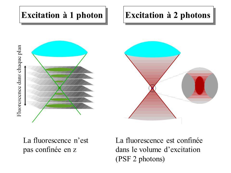 Excitation à 1 photon Excitation à 2 photons La fluorescence n'est