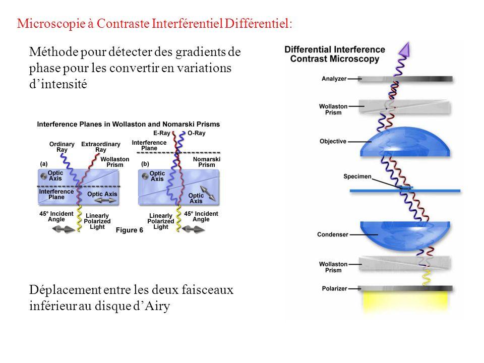 Microscopie à Contraste Interférentiel Différentiel: