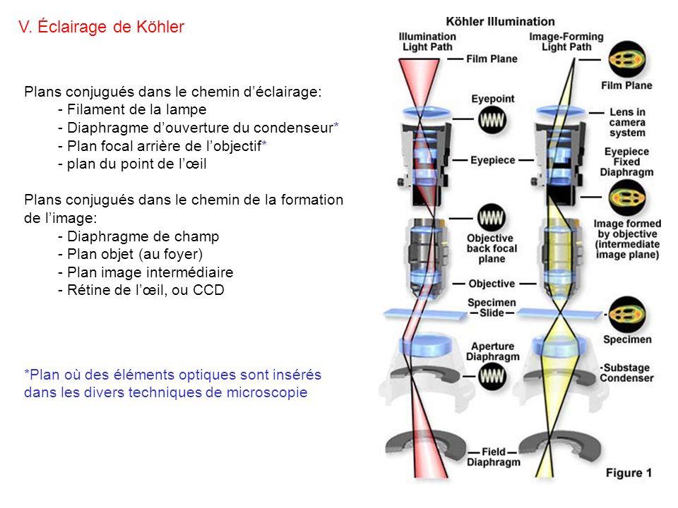 V. Éclairage de Köhler Plans conjugués dans le chemin d'éclairage: