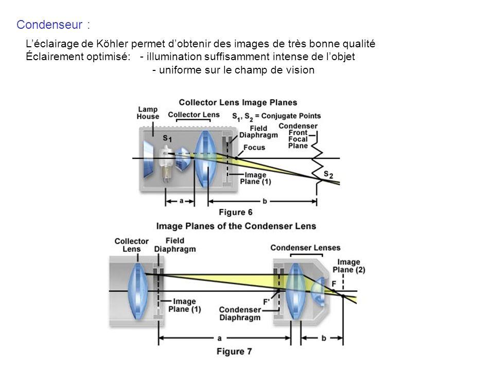 Condenseur : L'éclairage de Köhler permet d'obtenir des images de très bonne qualité.