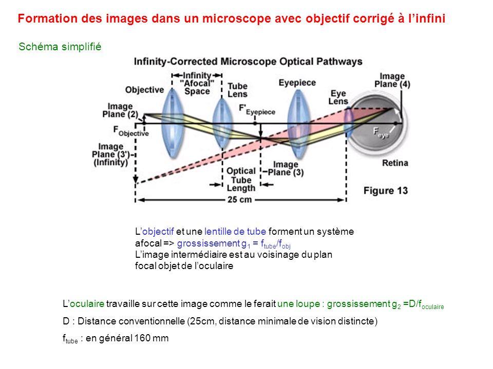 Formation des images dans un microscope avec objectif corrigé à l'infini
