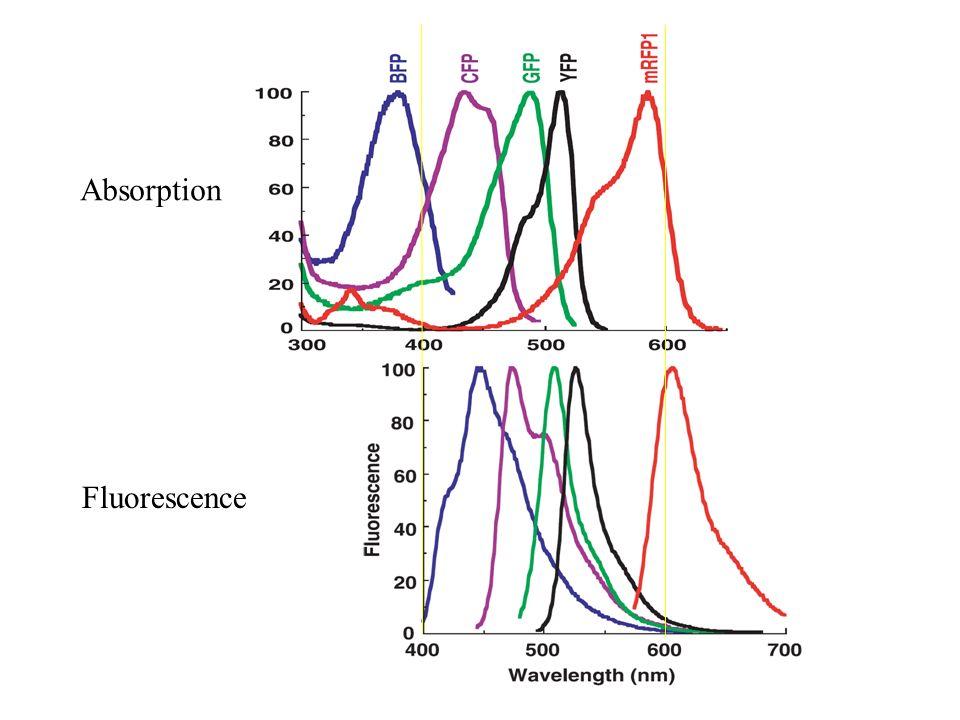 Absorption Fluorescence