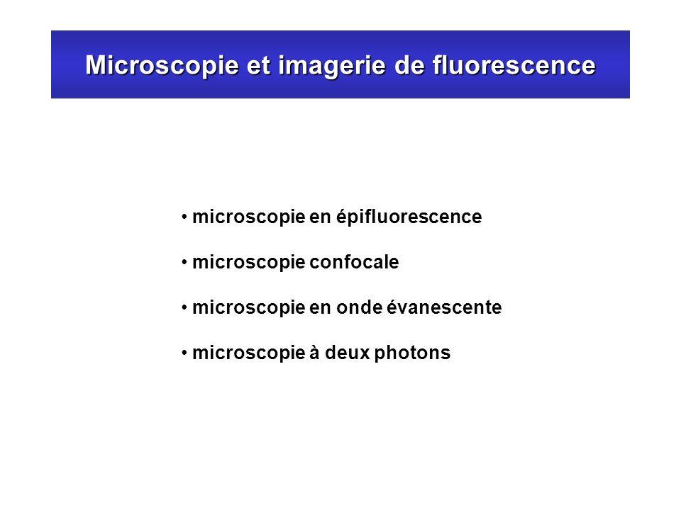 Microscopie et imagerie de fluorescence