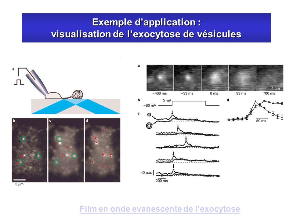 Exemple d'application : visualisation de l'exocytose de vésicules