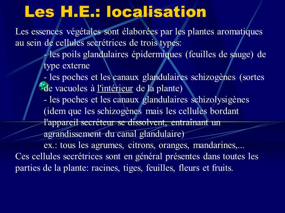 Les H.E.: localisation Les essences végétales sont élaborées par les plantes aromatiques au sein de cellules secrétrices de trois types: