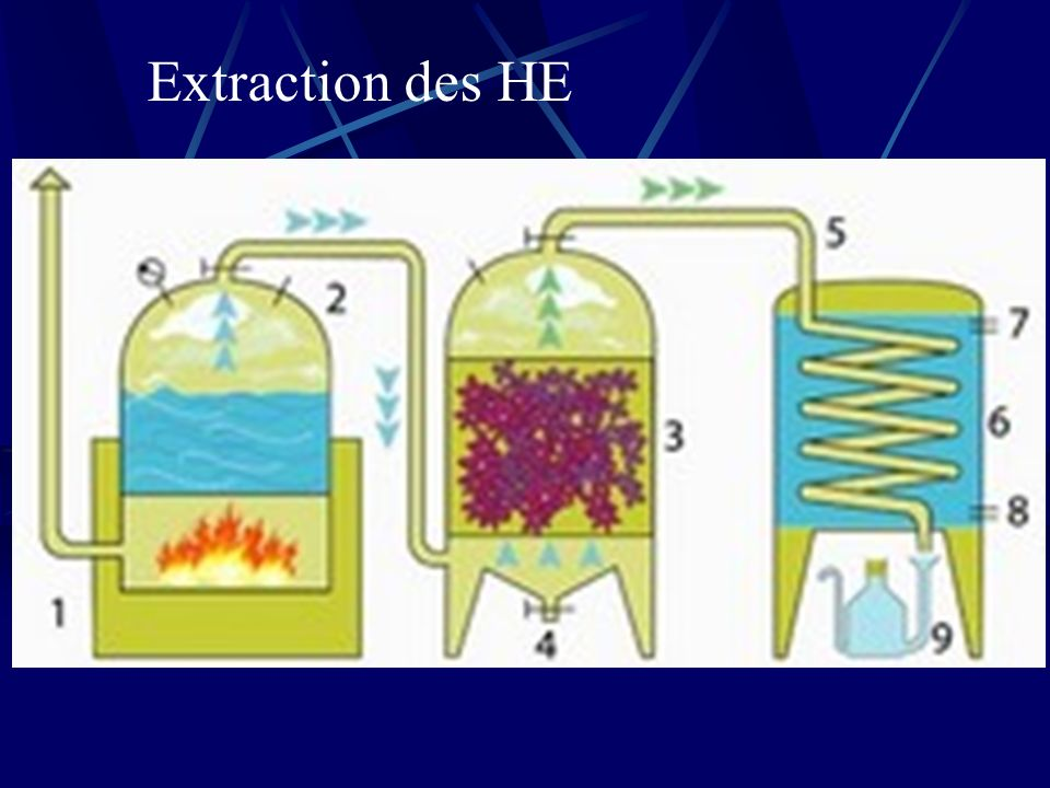 Extraction des HE