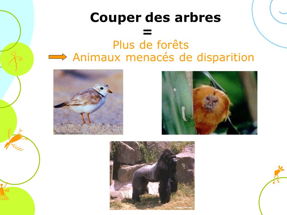 Animaux menacés de disparition