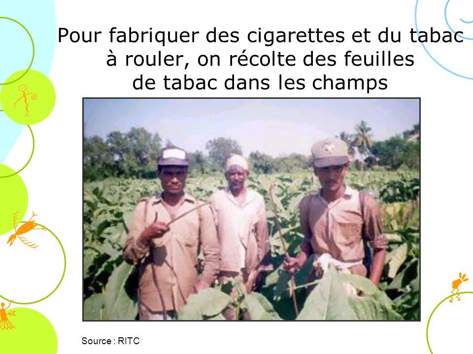 Pour fabriquer des cigarettes et du tabac à rouler, on récolte des feuilles de tabac dans les champs