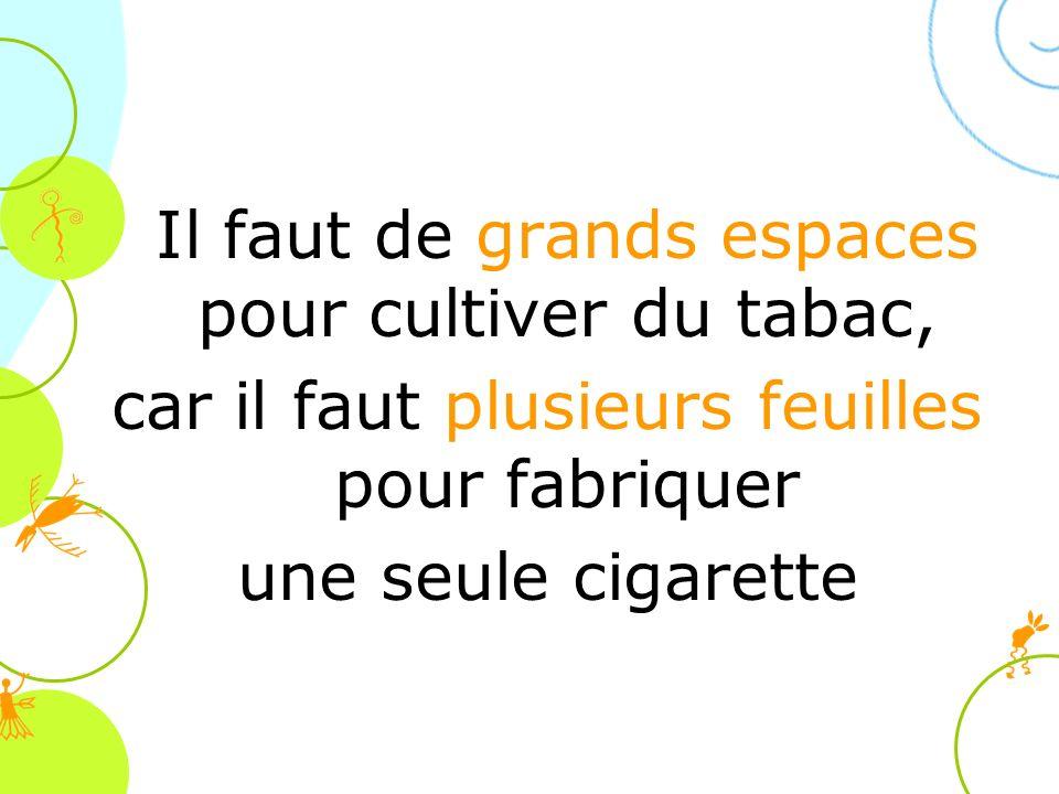 Il faut de grands espaces pour cultiver du tabac,