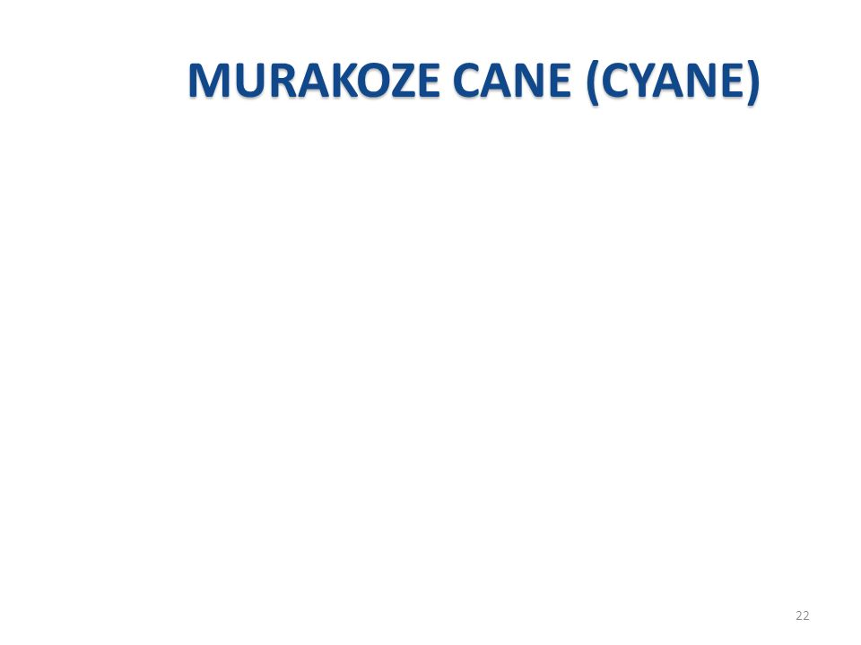 MURAKOZE CANE (CYANE)