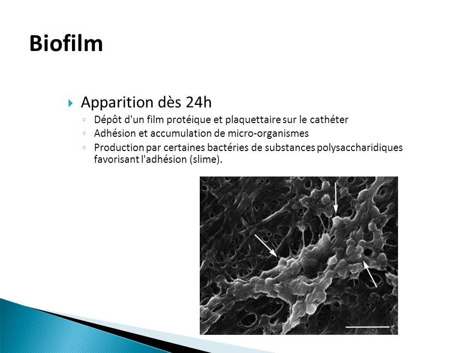 Biofilm Apparition dès 24h