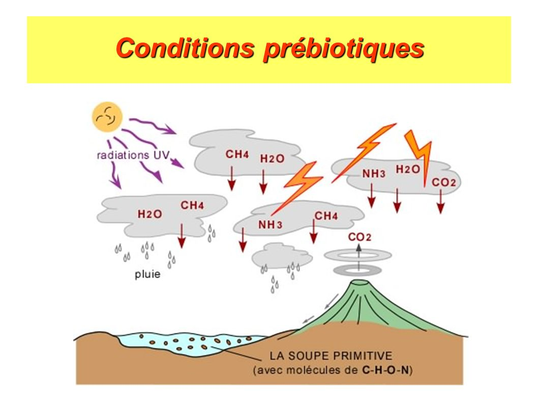 Conditions prébiotiques