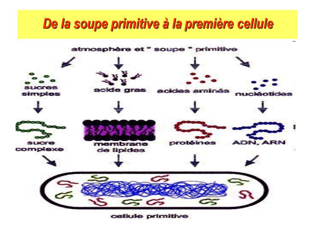 De la soupe primitive à la première cellule