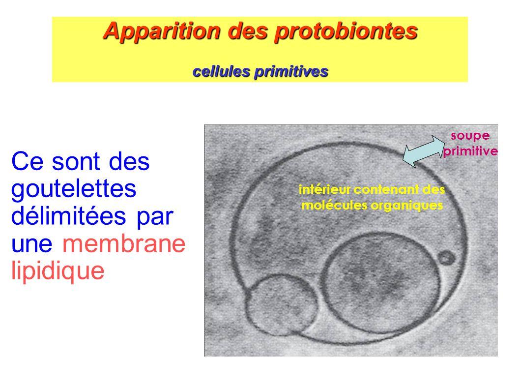 Ce sont des goutelettes délimitées par une membrane lipidique
