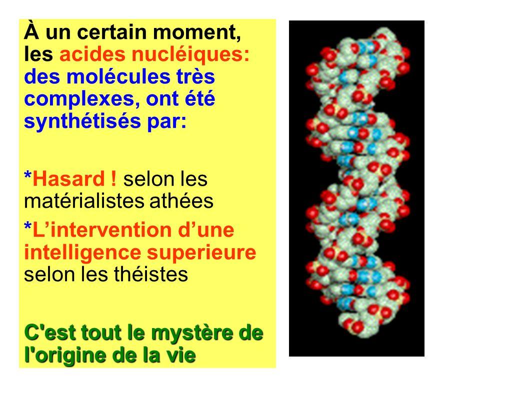 À un certain moment, les acides nucléiques: des molécules très complexes, ont été synthétisés par: