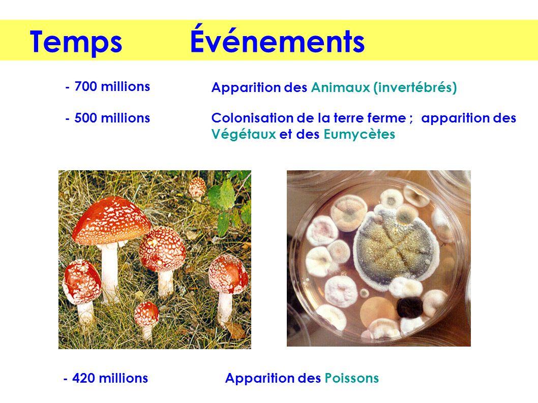 Temps Événements - 700 millions Apparition des Animaux (invertébrés)