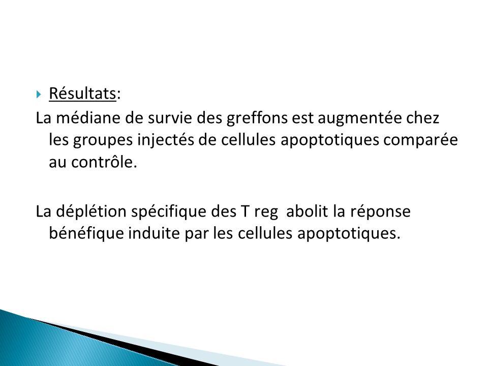 Résultats: La médiane de survie des greffons est augmentée chez les groupes injectés de cellules apoptotiques comparée au contrôle.