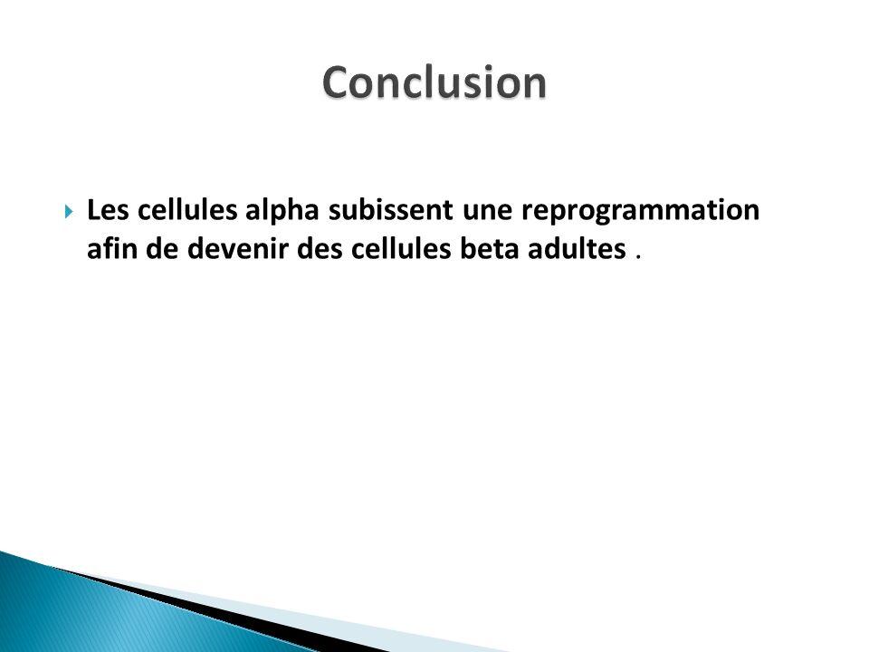 Conclusion Les cellules alpha subissent une reprogrammation afin de devenir des cellules beta adultes .