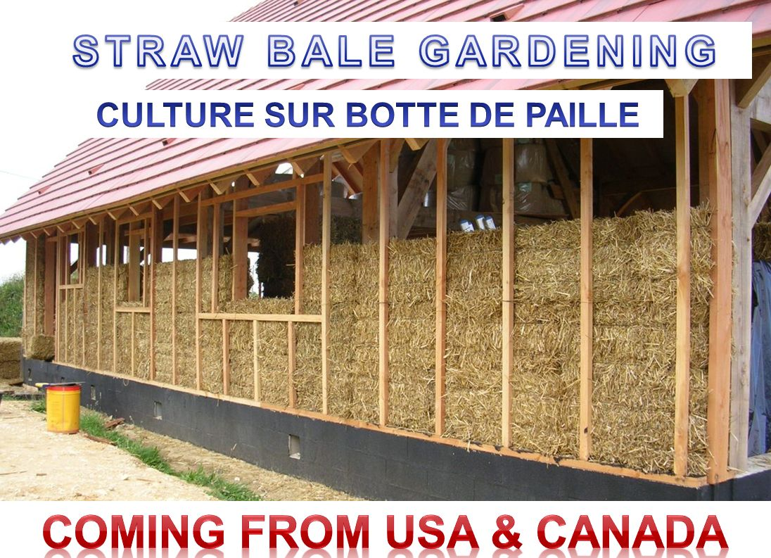 CULTURE SUR BOTTE DE PAILLE COMING FROM USA & CANADA