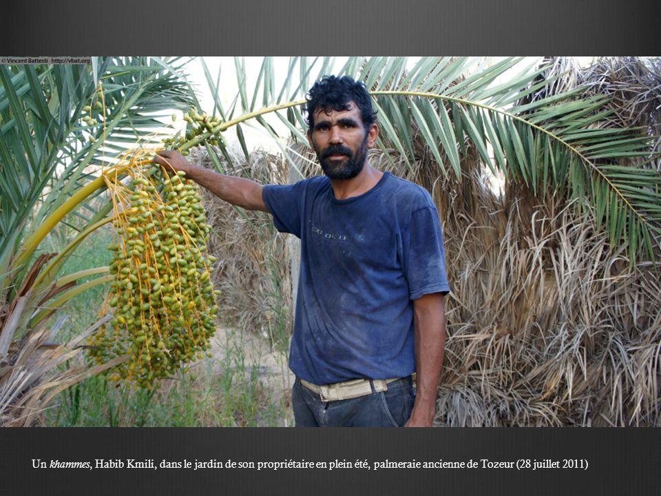Un khammes, Habib Kmili, dans le jardin de son propriétaire en plein été, palmeraie ancienne de Tozeur (28 juillet 2011)