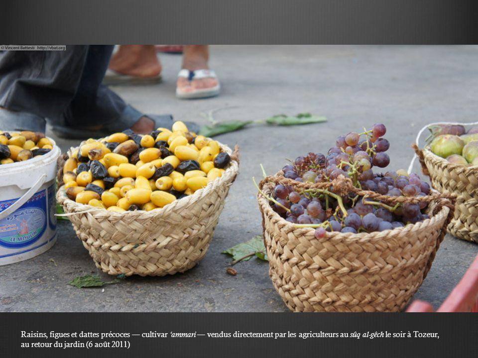 Raisins, figues et dattes précoces — cultivar 'ammari — vendus directement par les agriculteurs au sûq al-gêch le soir à Tozeur, au retour du jardin (6 août 2011)