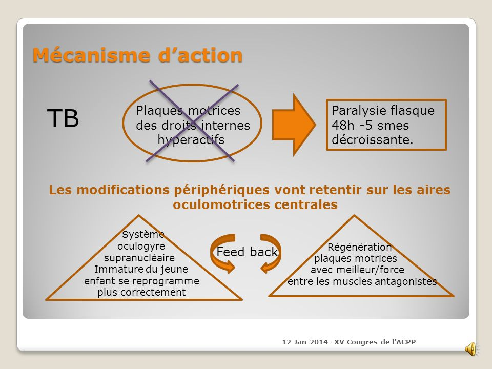 TB Mécanisme d'action Plaques motrices des droits internes hyperactifs