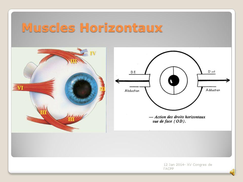 Muscles Horizontaux 12 Jan 2014- XV Congres de l'ACPP