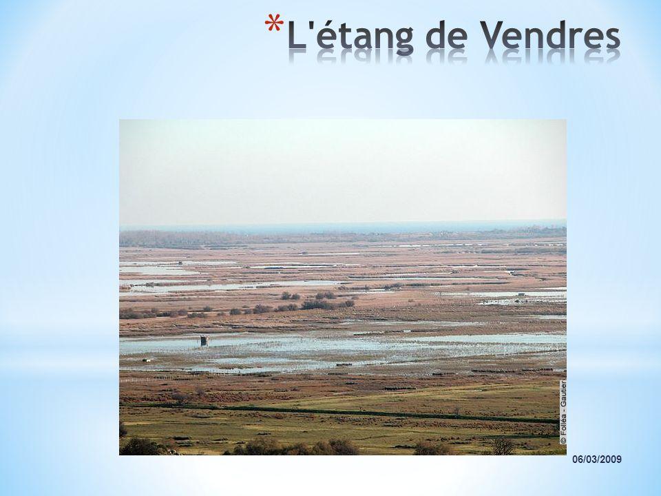 L étang de Vendres 06/03/2009