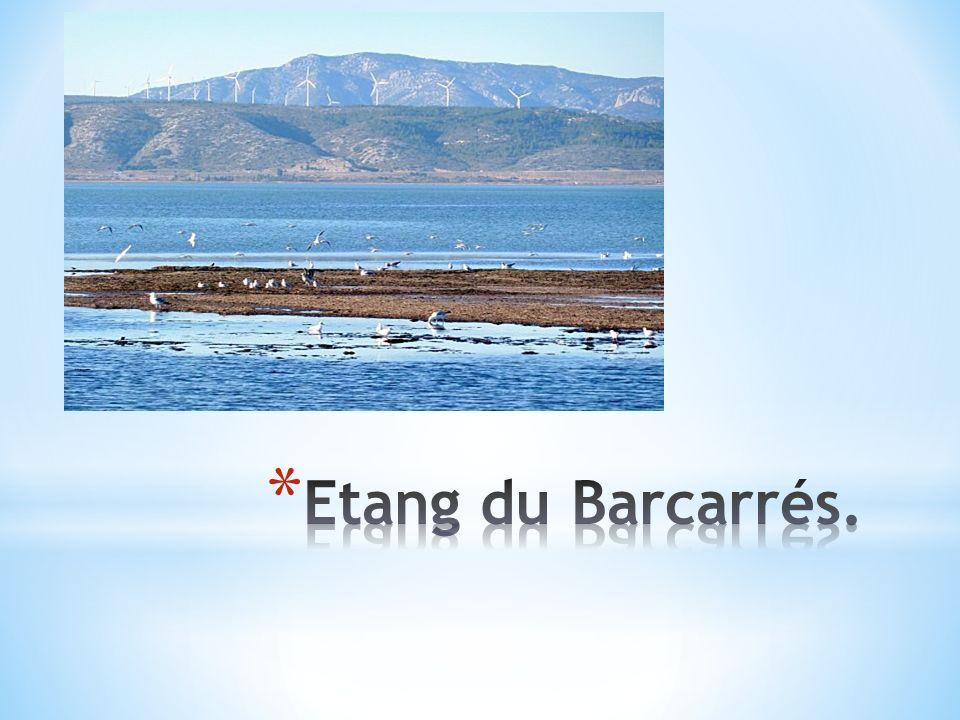 Etang du Barcarrés.