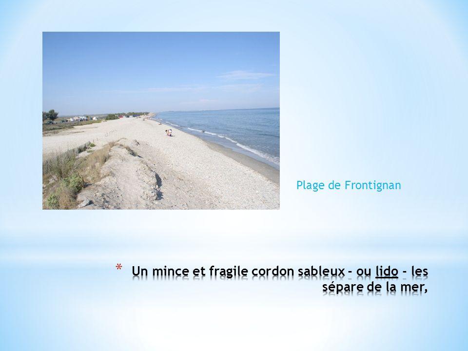 Un mince et fragile cordon sableux - ou lido - les sépare de la mer,