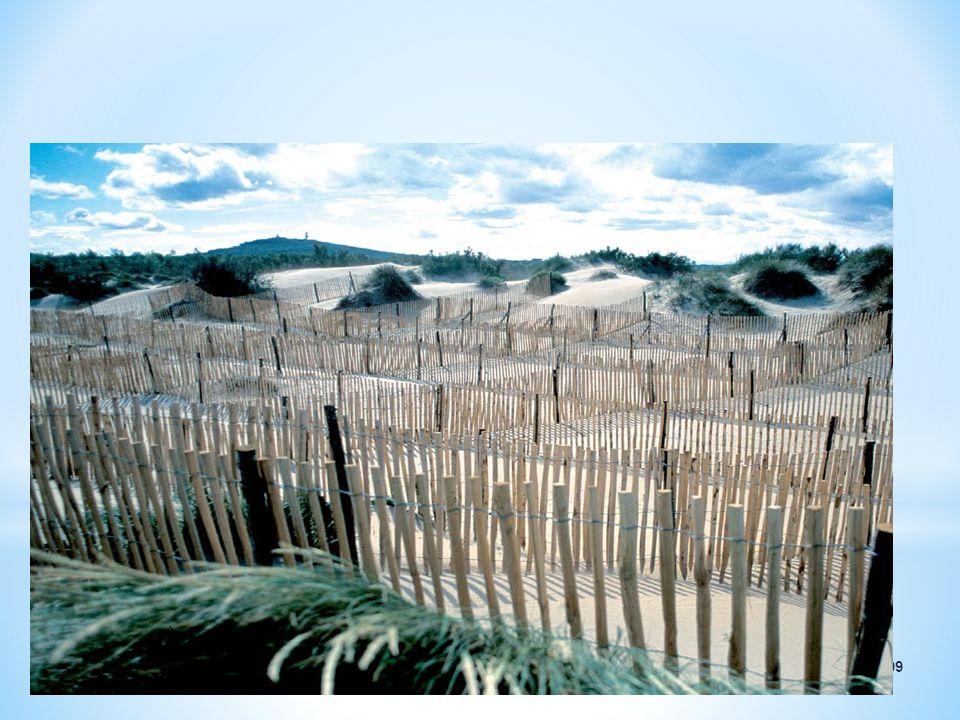 LES GANIVELLES (BARRIÈRES DE BOIS) sont un des moyens traditionnels utilisés pour réduire l'érosion des plages.